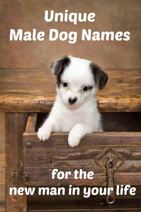 Male Dog Names: Top Ideas For The Popular Male Puppy